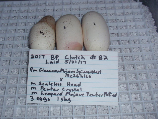 green eggs and dam 2017 ball python clutch records page 5
